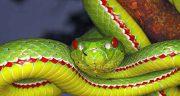 تعبیر خواب مار ، سیاه و سبز و زرد و قرمز و بزرگ و کبری و دوسر