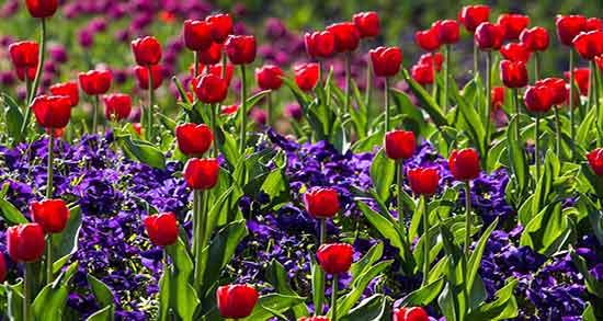 شعر در مورد بهار