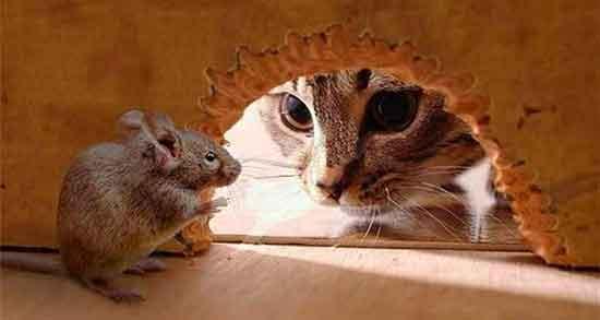 تعبیر خواب موش ، در خانه و فضله موش زرد و سفید و مرده و ترسیدن و دیدن و کشتن
