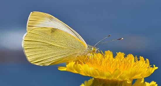 شعر در مورد پروانه ، شدن و شمع و گل و بهار و پیله کودکانه از حافظ
