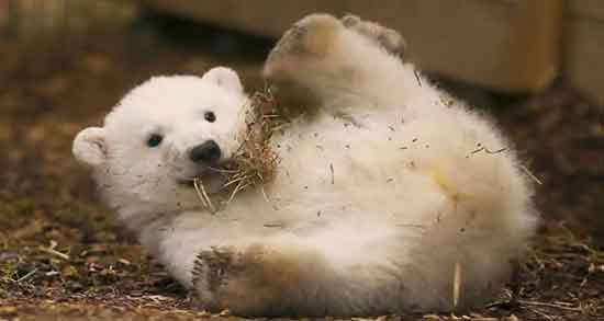 تعبیر خواب خرس , تعبیر خواب خرس سیاه , تعبیر خواب خرس سفید , تعبیر خواب خرس قهوه ای