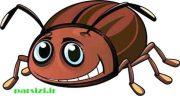 تعبیر خواب سوسک ،بالدار قهوه ای کشتن ریز مرده در غذا دهان خوردن در خانه چیست