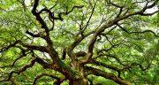 تعبیر خواب درخت ، سیب انار انگور گردو انجیر توت میوه بلند آلبالو+چیدن و کاشتن