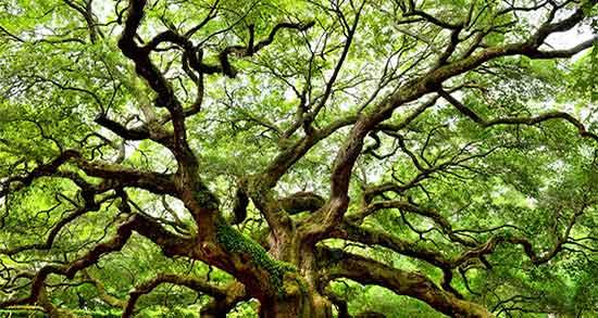 تعبیر خواب درخت , تعبیر خواب درخت سیب , تعبیر خواب درخت انگور , تعبیر خواب درخت انار