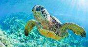 تعبیر خواب لاک پشت ، بزرگ و خیلی بزرگ کوچک مرده سبز دریایی سفید زیاد در آب