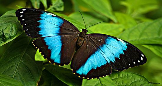 شعر در مورد پروانه , شعر در مورد پروانه شدن , شعر در مورد پروانه و شمع , شعر در مورد پروانه و گل