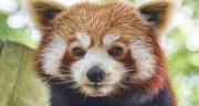 شعر در مورد حمایت از حیوانات ، محبت و مهربانی با حیوانات