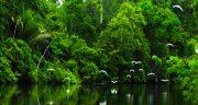 شعر در مورد جنگل ، پاییزی مه آلود سوخته و درخت و عشق