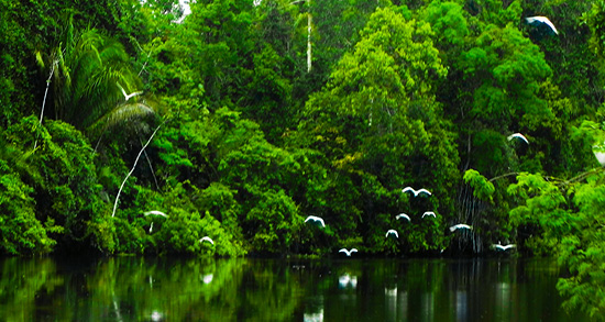 شعر در مورد جنگل , شعر در مورد جنگل و درخت , شعر در مورد جنگل و عشق , شعر در مورد جنگل مه آلود