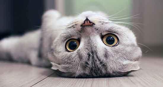 تعبیر خواب گربه , تعبیر خواب بچه گربه , تعبیر خواب حمله گربه , تعبیر خواب کشتن گربه