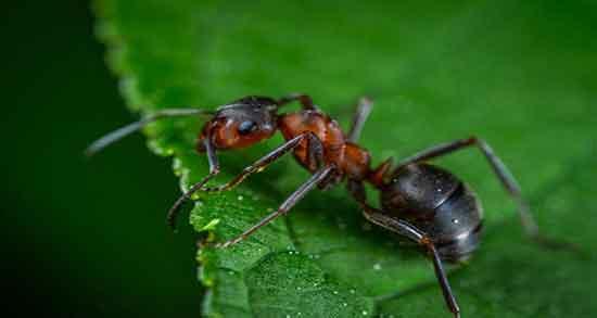تعبیر خواب مورچه ، تعبیر خواب مورچه سیاه ، تعبیر خواب مورچه زرد ، تعبیر خواب مورچه کشتن