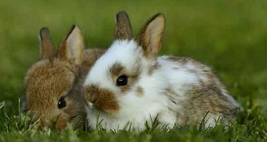 تعبیر خواب خرگوش , تعبیر خواب خرگوش سفید , تعبیر خواب خرگوش قهوه ای , تعبیر خواب خرگوش زخمی