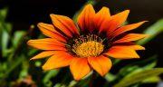شعر در مورد صبح بخیر ، گفتن عشقم + صبح زیبا جمعه پاییزی و بهاری عاشقانه