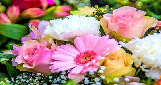 عکسهای گلهای زیبا جهان,عکس گل عشق من