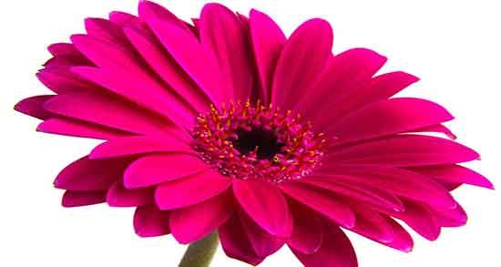 عکس گل برای تولد همسر,عکس گل برای تولد دوست,عکس گل برای تولد نوزاد