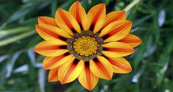 عکس گل بابونه خشک شده,عکس گل بابونه زیبا,عکس گل بابونه پروفایل