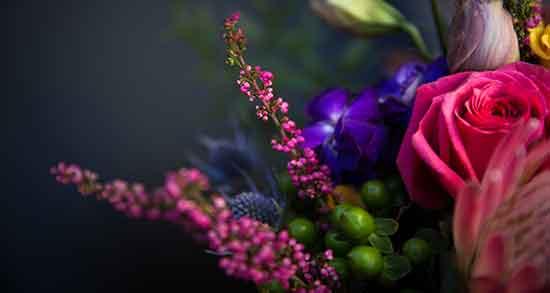 عکس گل نرگس در دست دختر,عکس گل نرگس زیبا برای پروفایل,عکس گل بابونه خشک
