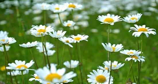 عکس گلهای زیبای جهان برای پروفایل,عکسهای گلهای زیبای جهان
