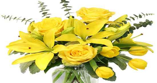عکس گلهای زیبا برای پروفایل تلگرام,عکس گلهای زیبا با متن,عکس گلهای زیبا برا پروفایل