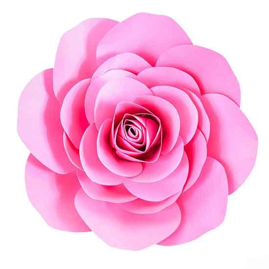 عکس گل نرگس با کیفیت اچ دی,عکس گل نرگس شهلا,عکس گل نرگس شیراز