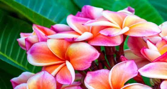 عکس گل های زیبا جهان,تصاویر گل های زیبای جهان,عکس دسته گل های زیبای جهان