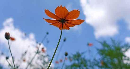 عکس گل برای تولد دانلود,عکس گل برای تولد مادر,عکس گل پروفایلی
