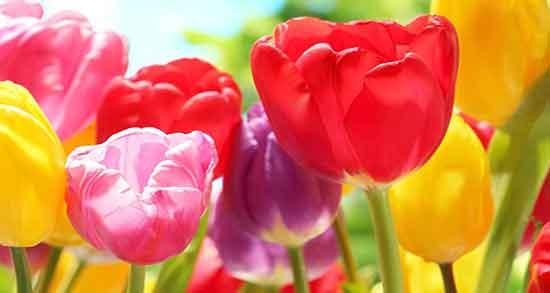 عکس گل برای پروفایل غمگین,عکس گل برای پروفایل پسرانه,عکس گل های زیبای جهان دانلود