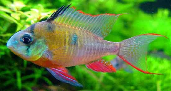 تعبیر خواب ماهی گرفتن ، تعبیر خواب ماهی گرفتن با دست از رودخانه ، تعبیر خواب ماهی گرفتن از دریا ، تعبیر خواب ماهی گرفتن از آب