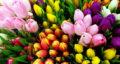 شعر در مورد اردیبهشت ماه ، شیراز و بانوی اردیبهشت ماهی