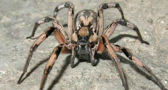 تعبیر خواب عنکبوت سیاه