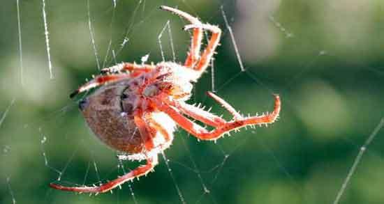 تعبیر خواب عنکبوت زرد