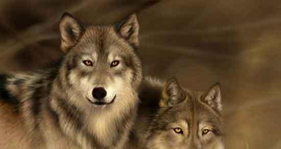 شعر در مورد گرگ