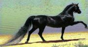 شعر در مورد اسب ، سفید و سیاه و وحشی و اسب سواری
