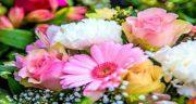شعر در مورد گل ، سرخ و رز قرمز و لاله و نرگس و شقایق و گل محمدی و زرد