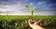 شعر در مورد زراعت ، شعر و جملات زیبا در مورد کشاورزی برای کودکان