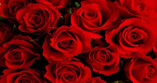 شعر در مورد گل رز