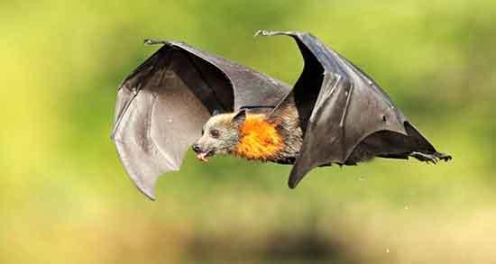 شعر در مورد خفاش