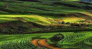 شعر در مورد مازندران ، به زبان محلی از شاعر مازندرانی و ادبیات بومی مازندران