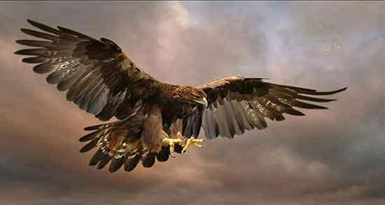 شعر در مورد عقاب ، شعر مولانا در مورد عقاب و شعر کوتاه و زیبا عقاب و کلاغ