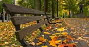 شعر در مورد زیبایی پاییز ، از سعدی مولانا شاملو فریدون فروغی فروغ اخوان ثالث