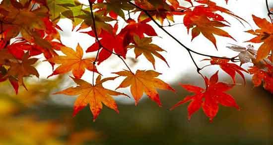 شعر پاییز فروغ ، شعر معروف و دوبیتی درباره پاییز از شاملو و شهریار و مولانا