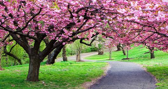 شعر در مورد فصل بهار ، تک بیتی و دوبیتی و شعر کودکانه درباره بهار از حافظ