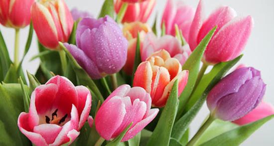 شعر در مورد گل لاله ، متن عاشقانه و کوتاه درباره لاله واژگون از سعدی و فردوسی