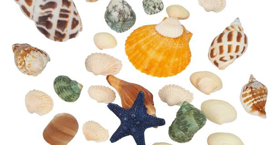شعر در مورد صدف ، متن ادبی و شعر کودکانه درباره دریا و مروارید و ساحل از سعدی