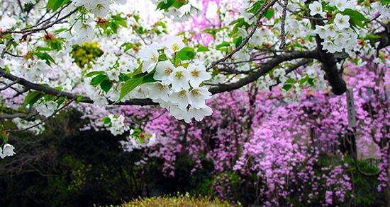 شعر در مورد آمدن فصل بهار ، شعرهای دوبیتی درباره زیبایی بهار از سعدی و شاملو