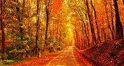 شعر عاشقانه پاییزی شاملو ، شعر پاییز مولانا و فروغ + شعر در مورد پاییز برای انشا