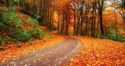 شعر در مورد پاییز از فریدون مشیری ، شعر دوبیتی و معروف درباره پاییز از سعدی