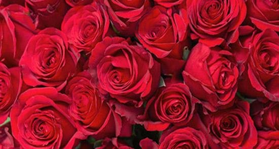 شعر در مورد رنگ قرمز ، شعر و متن زیبا در مورد رژ قرمز + لباس و شال قرمز