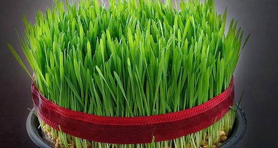 شعر در مورد سبزه ، شعر و دوبیتی درباره بهاره و عید نوروز از سعدی و شاملو
