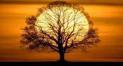 شعر در مورد درخت ، شعر در مورد درخت سبز زندگی از مولانا و سعدی و شاملو